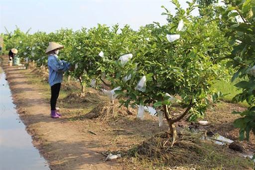 Thuê đất công ích để sản xuất nông nghiệp không quá 5 năm